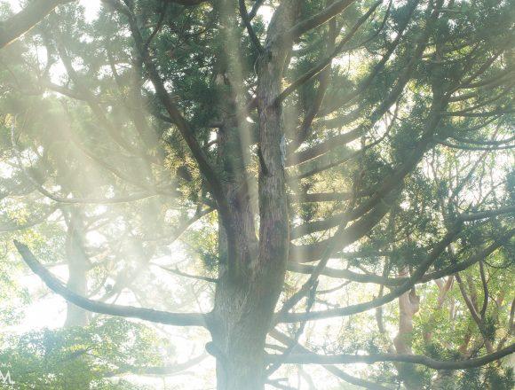 雨の森に光さす 屋久島